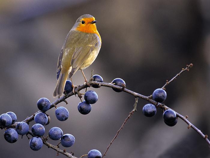Календарь мне сказал, что сегодня день Птиц.  Поздравляю всех нас=).