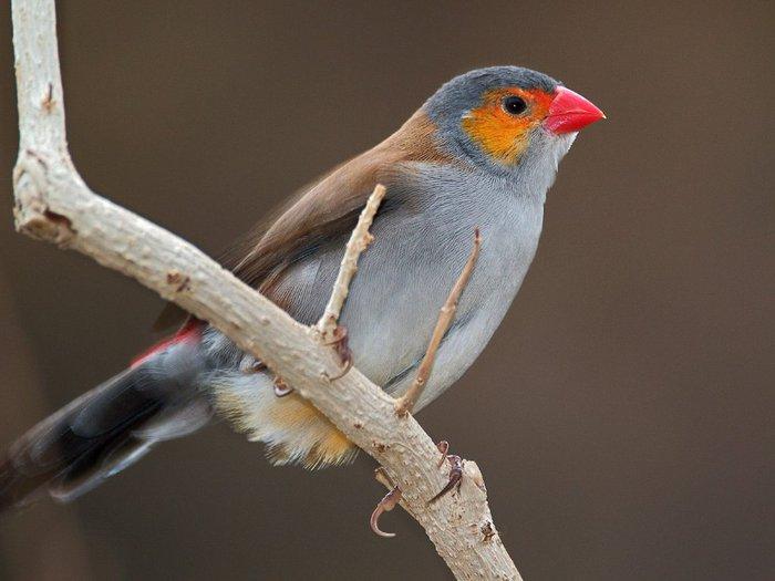 Фото самых красивых птиц со всего мира,некоторые особи так привлекают своей