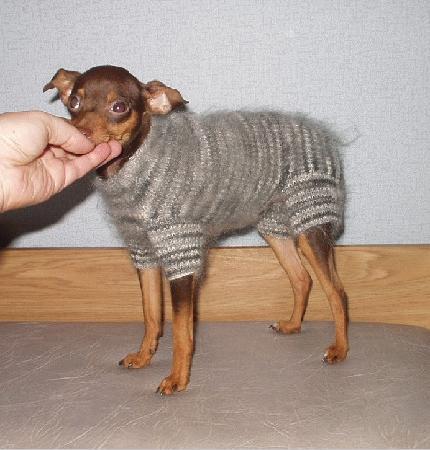 Этот комбинезон я вязала для собаки квадратного формата ростом 24 см, хотя после того, как его связала...
