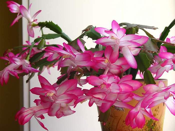 http://img0.liveinternet.ru/images/attach/c/2/67/567/67567272_health_dekabrist01.jpg