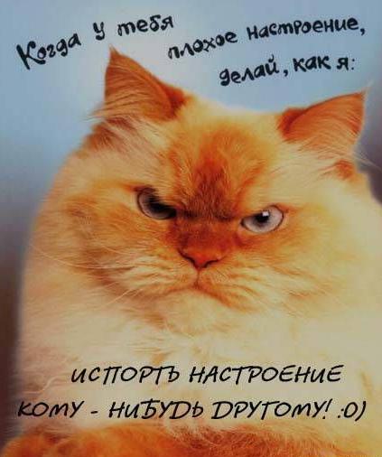 i-Social.ru