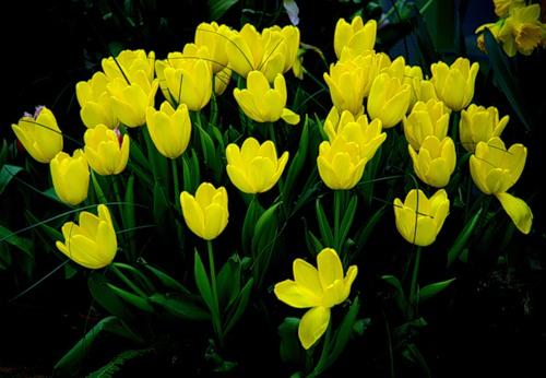Дарите желтые цветы