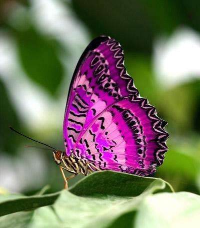 Такой чудесный пост.  С детства для меня бабочка - оживший цветок.  Когда вижу их по прежнему испытываю детский...