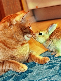 sevimli tavşanlar hayvan resimleri kelebek gifleri kedi resimleri
