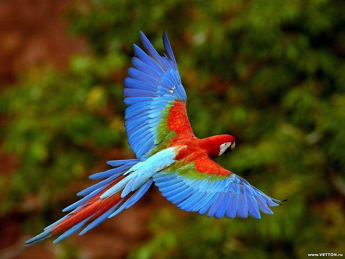 Код для вставки на сайт (блог).  Скачан 4 раз.  Птицы.  Обои на тему.