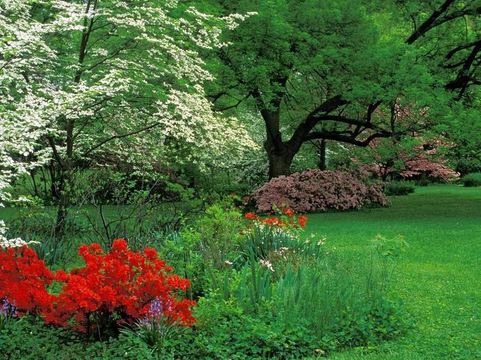 картинка прекрасный сад на телефон.