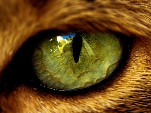 Глаз самое интересное в блогах