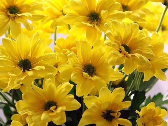 Цветы в доме и приметы цветоводы