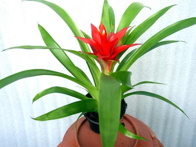 Комнатные растения с бордовыми
