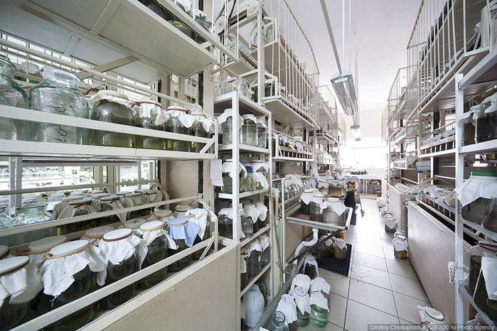 """Международный центр медицинской пиявки, созданный на базе образованного в 1937 г. объединения  """"Медпиявка """"..."""