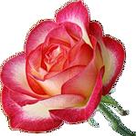 http://img0.liveinternet.ru/images/attach/c/2/69/628/69628801_0_61b87_28388b9e_S.png