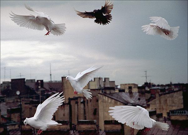 летит над зоной белый пух видео