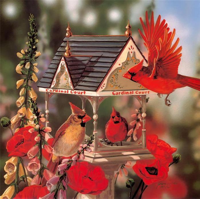 Скачать обои красный кардинал, кормушка для птиц, Janene Grende 800x600.