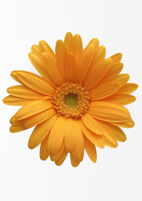Цветок без фона картинка 1