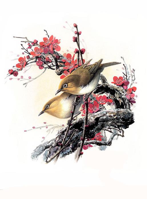 Птицы.Клипарт растровый JPG./на белом фоне.