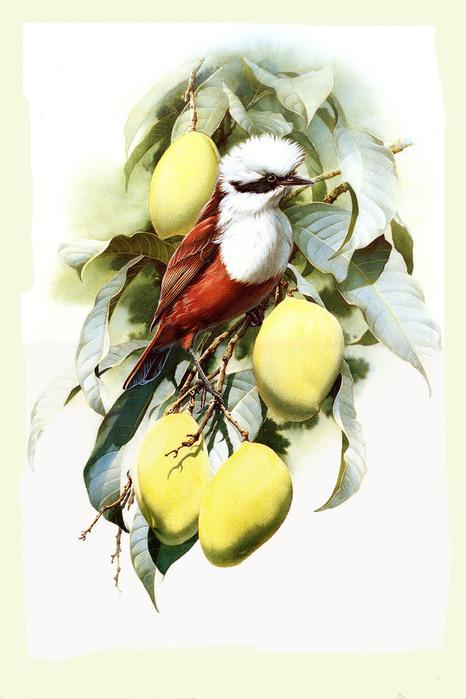 """Клипарт PNG  """"Цветы и птицы """"  часть 1 (10 единиц).  Найдено в сети.  Прочитать целикомВ."""
