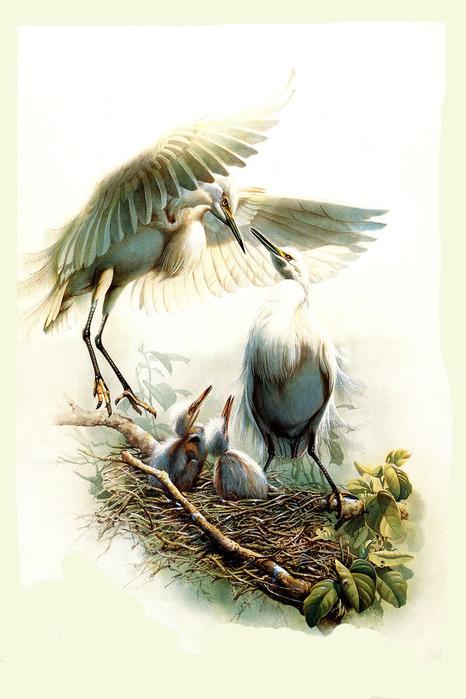 Картинки с фантастическими птицами 31 шт.  TIF Разрешение: от 879x1191 до