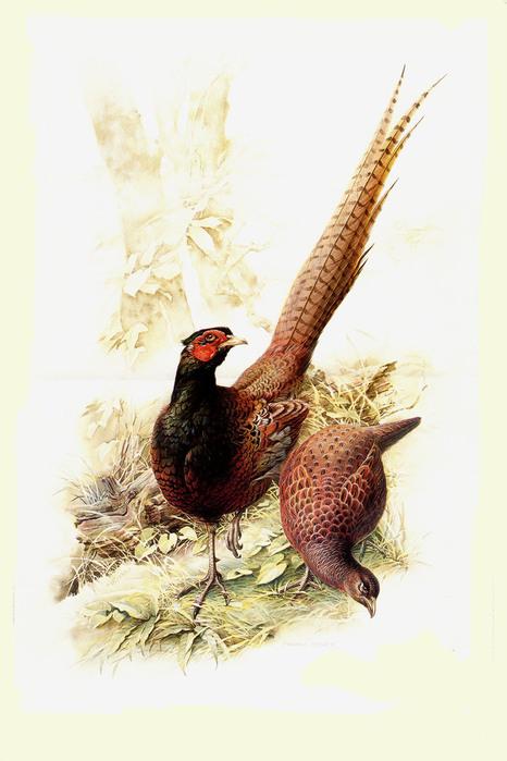 Птицы и цветы - традиционная тема китайской живописи.  В помощь декупажницам - попугаи.