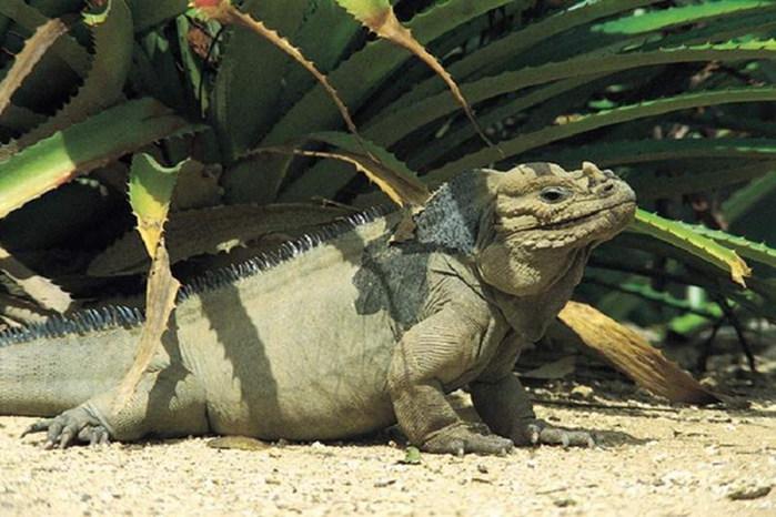 Начнём с пляжей…Самым популярным курортом Доминиканы является Пунта Кана.