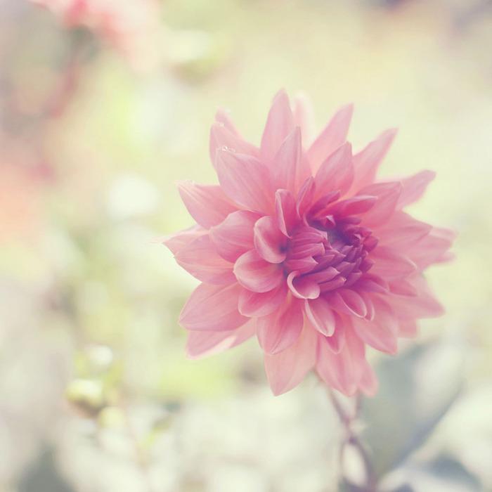 Красивые нежные цветы картинки 3