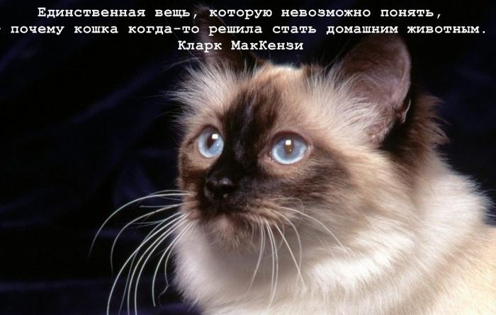 И думала кошка ночью о том, Что уже никому не нужна.