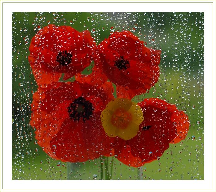 Блог - Привет.ру - Утренняя свежесть цветов после дождя (фото) - Личный интернет дневник пользователя Lenchonka.