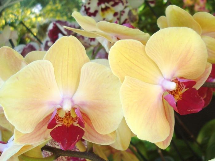 Прекрасньй цветок - Экзотическия Орхидея.