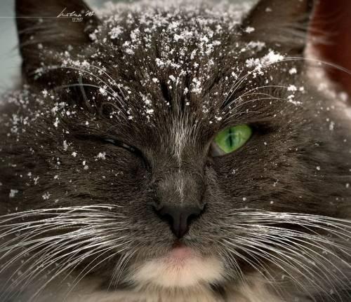 И кошки часть 1 зима и кошки часть 2
