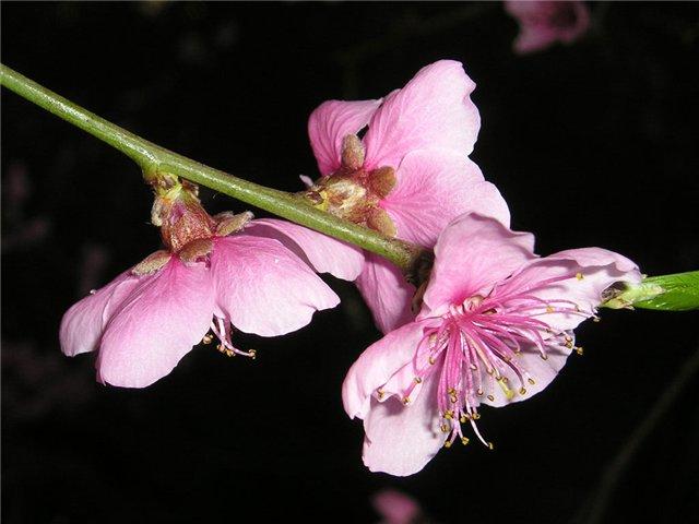 Каждый год метеорологические агентства и средства массовой информации четко следят за началом сезона цветения и...