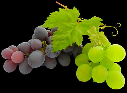 Вследствие такого списка составляющих применений у винограда и виноградного сока много.  Так какова же польза...