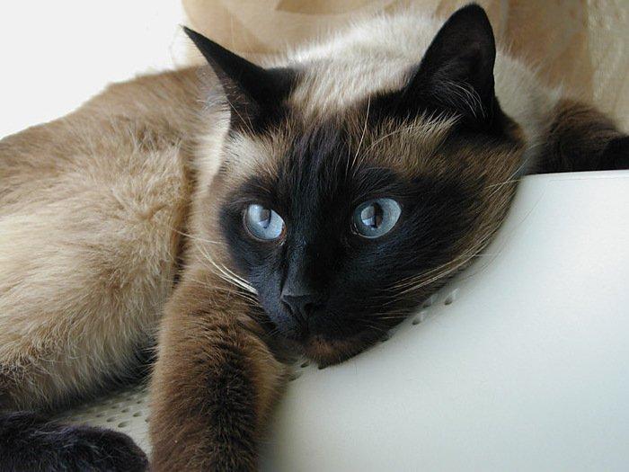 Если это кошка, то она, конечно, вырастет и