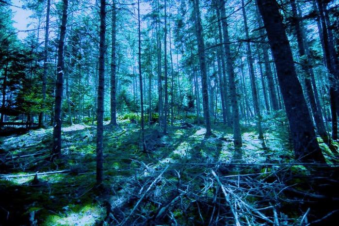синий лес картинки