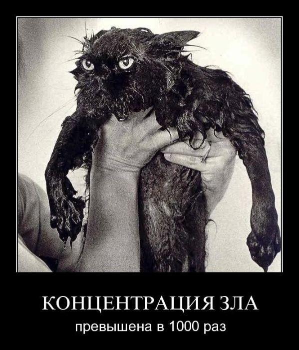 http://img0.liveinternet.ru/images/attach/c/2/72/532/72532636_1300987835_demotivm.jpg