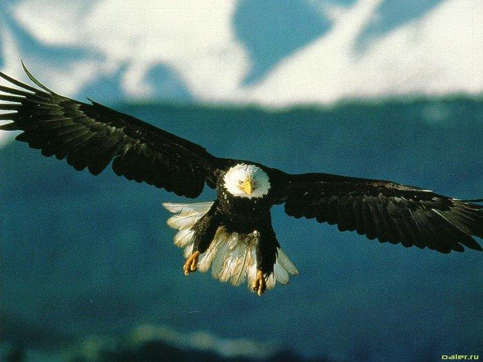 Орел.