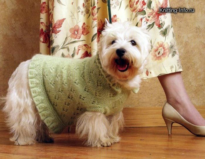 Вязание для собак.