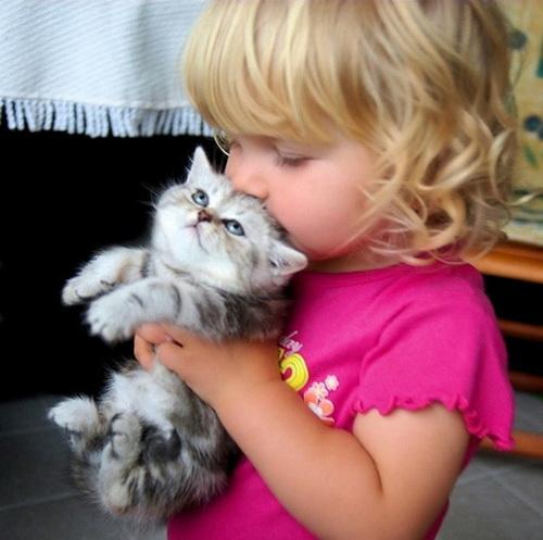 Самая большая кошка в мире.  10 жетонов. животные.  Коалу назвали Рублем.