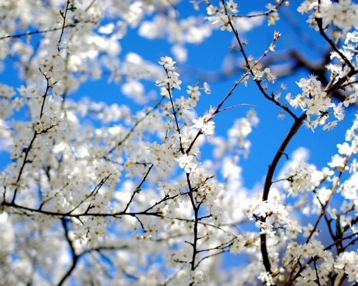 В ожидании весны много картинок