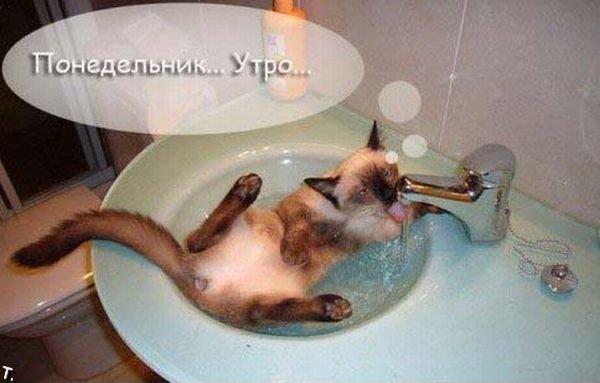 http://img0.liveinternet.ru/images/attach/c/2/72/81/72081900_poned1_28.jpg