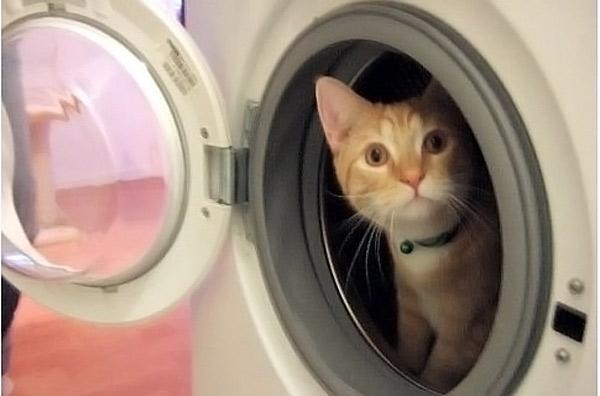 Кот ушел погулять из дома хозяев Лизы и Ваутера Браафов, зашел к их соседке и забрался в стиральную машину.