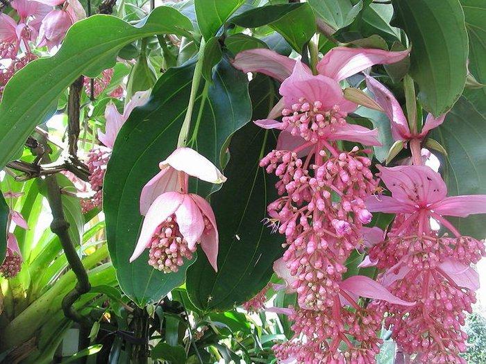 фото необычных цветов: