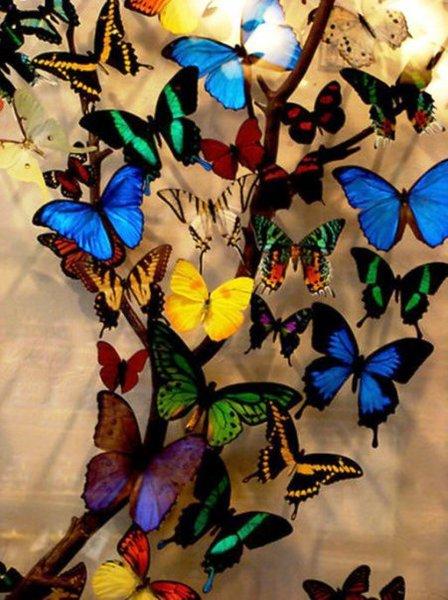 butterflies (448x600, 69Kb)