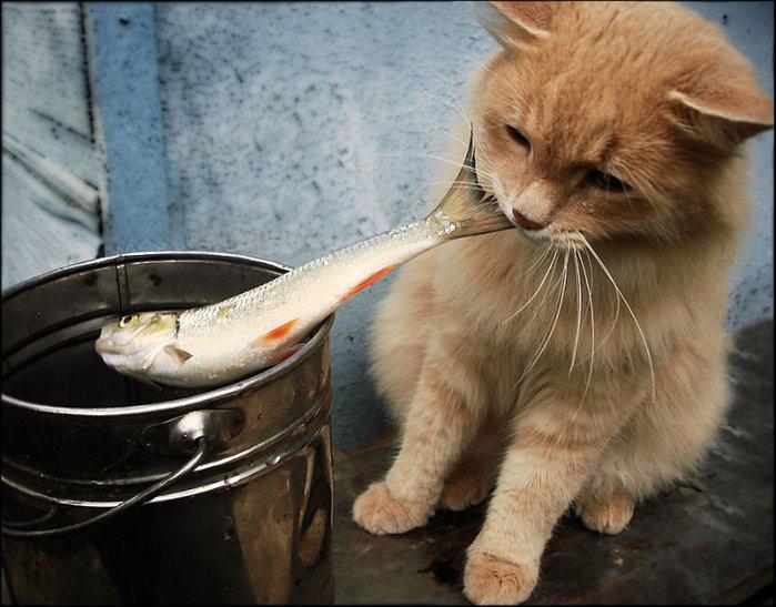 котяшка с рыбкой (700x547, 76Kb)