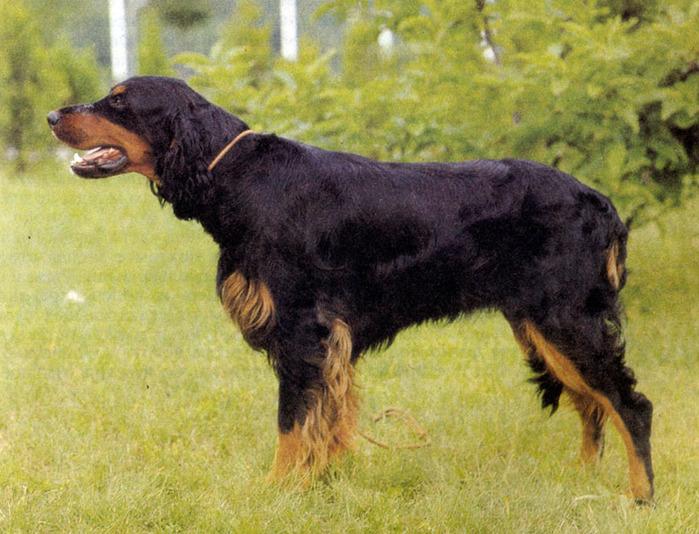 собаки охота (700x534, 162Kb)
