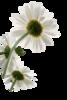 Превью Flowers (403x600, 201Kb)