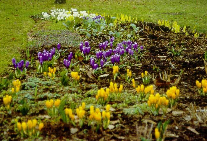 Посадки в цветниках пейзажного