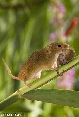 mouse_5 (270x397, 17Kb)