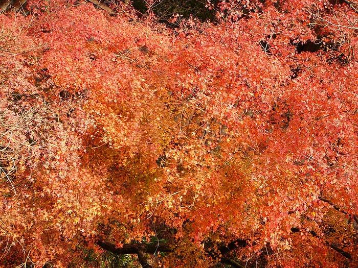Киёмидзу-дэра - храм для всех. 30508
