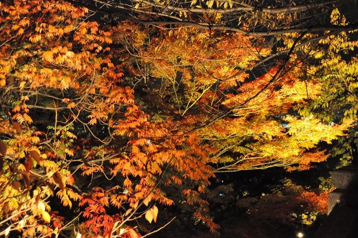 Киёмидзу-дэра - храм для всех. 56126