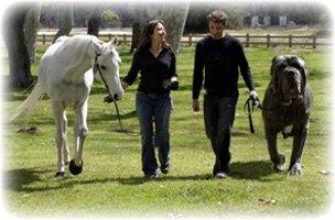 Собака размером с лошадь возможно ли