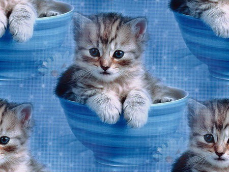Animals_Cats__002033_1 (450x338, 74Kb)